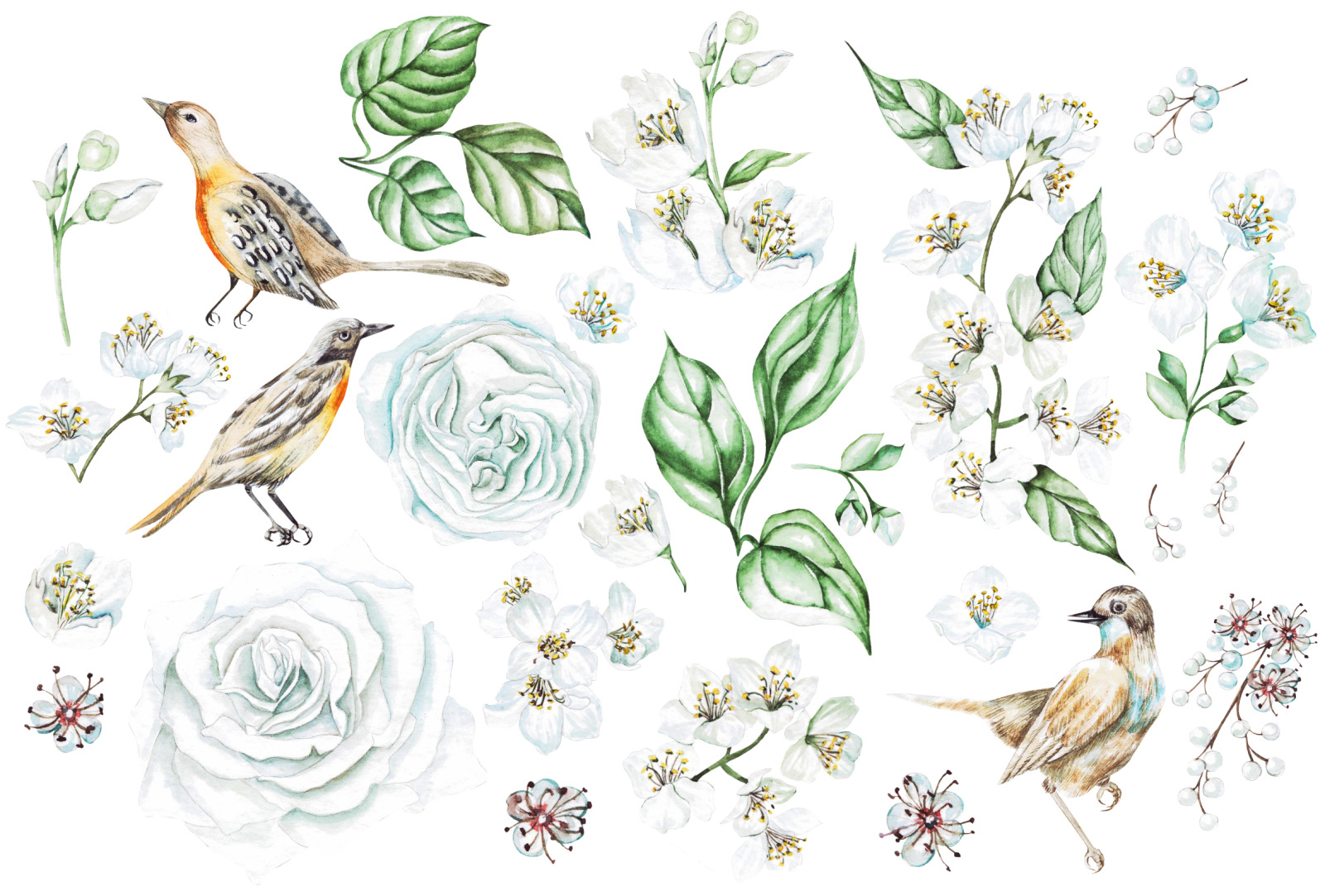 Watercolor Jasmine & Roses