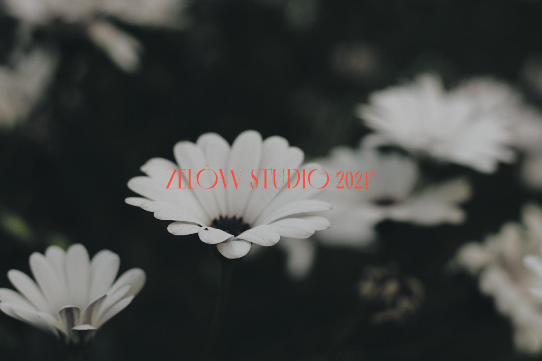 Virzo Font