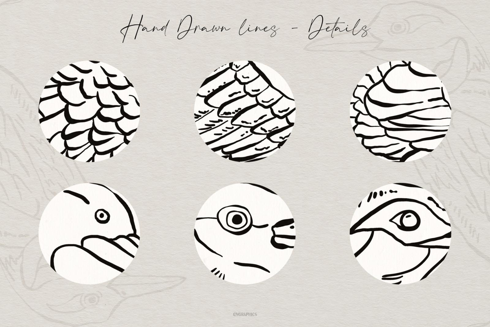 Hand Drawn Birds Vector Illustrations Vol.1