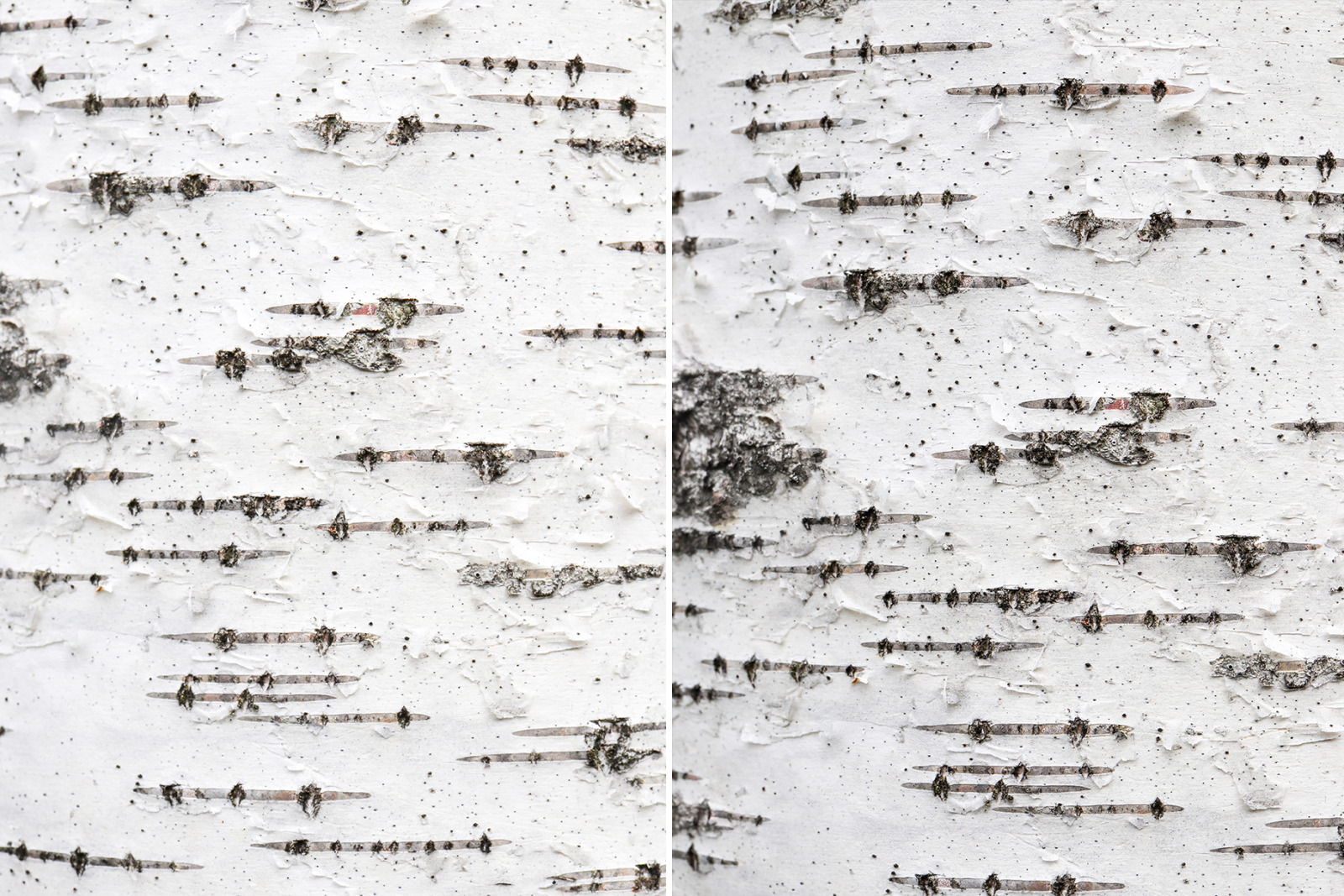 12 Birch Bark Background Textures