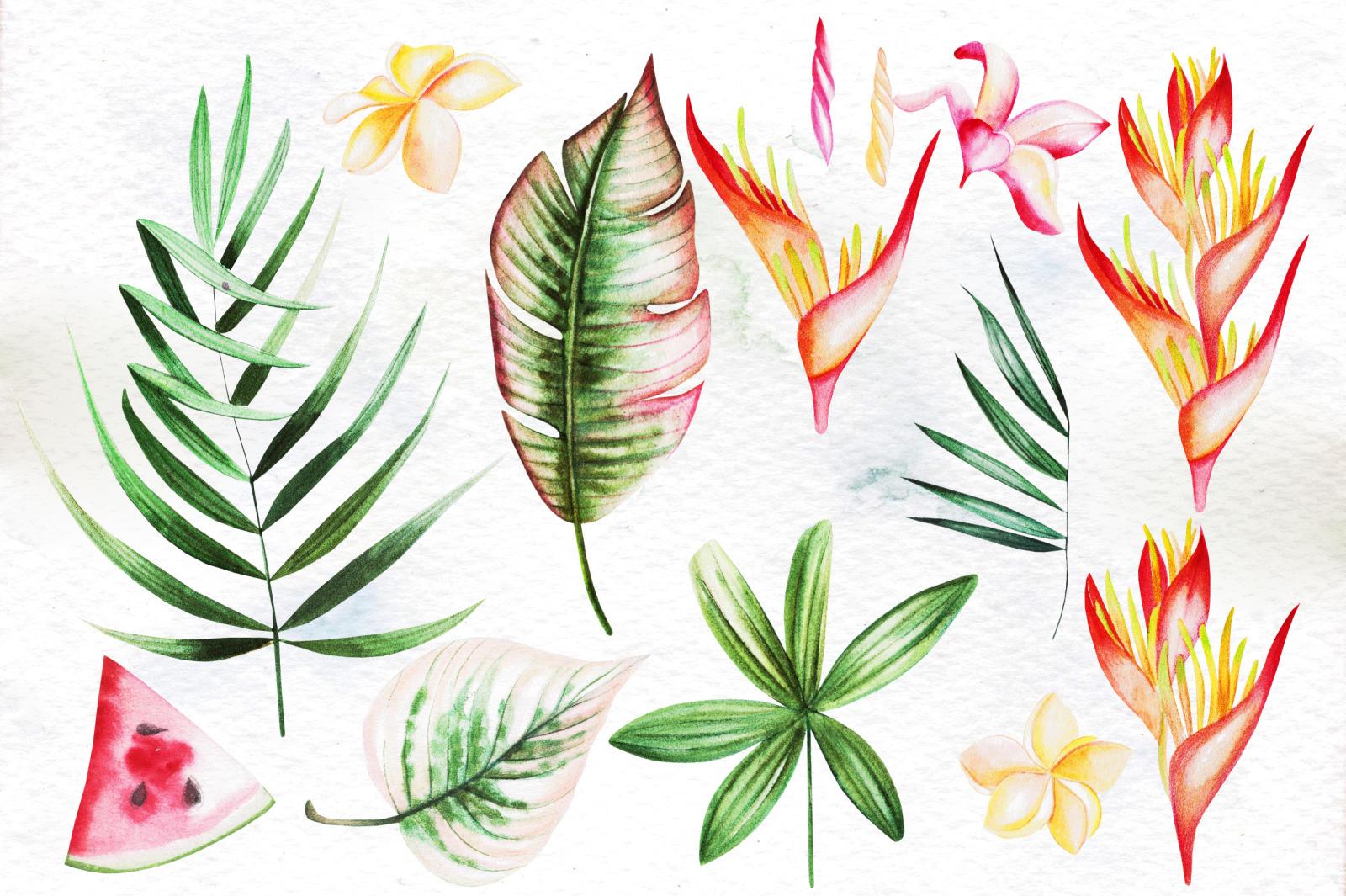 Hand Drawn Watercolor Tropic 4