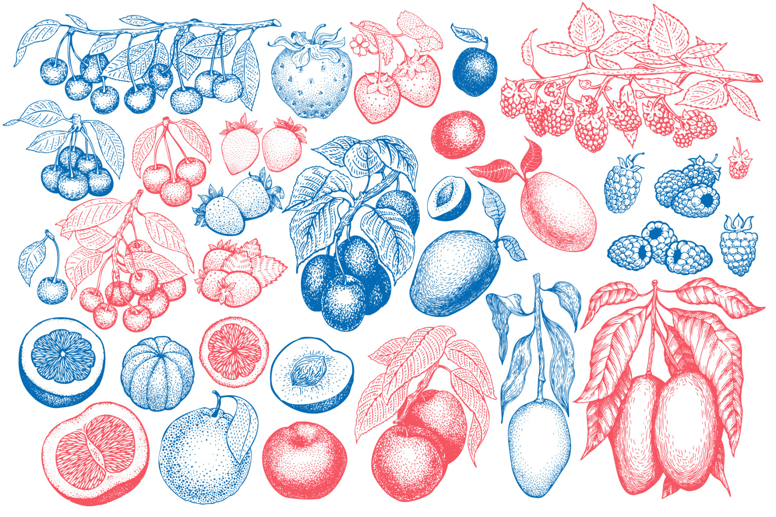 Fruits&Berries Vector Collection