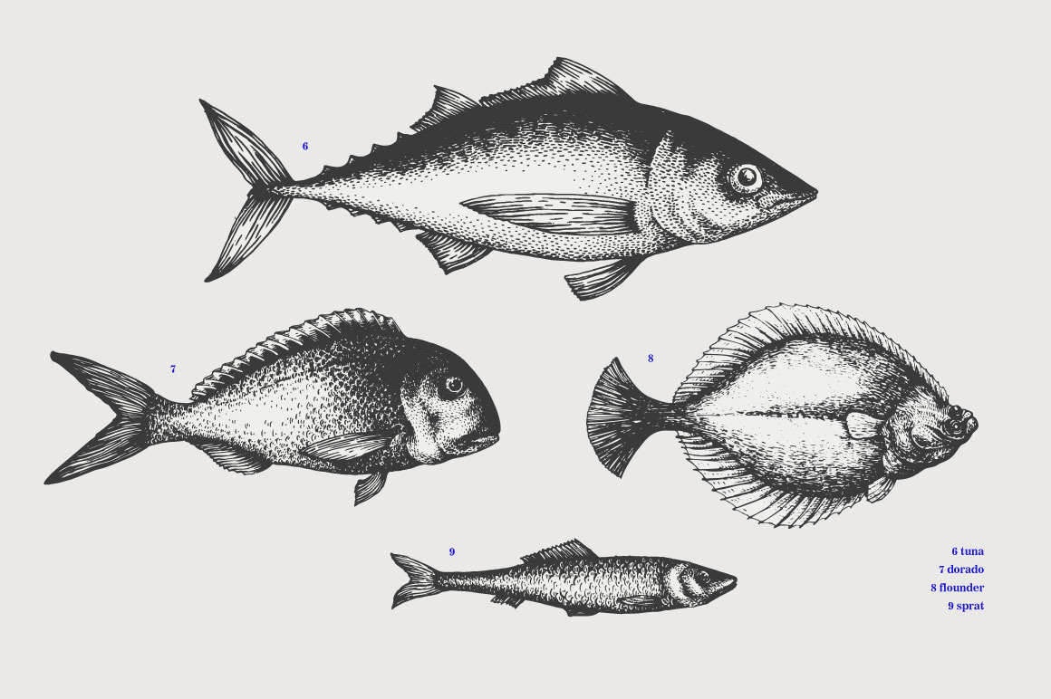 Fish Vector Collection