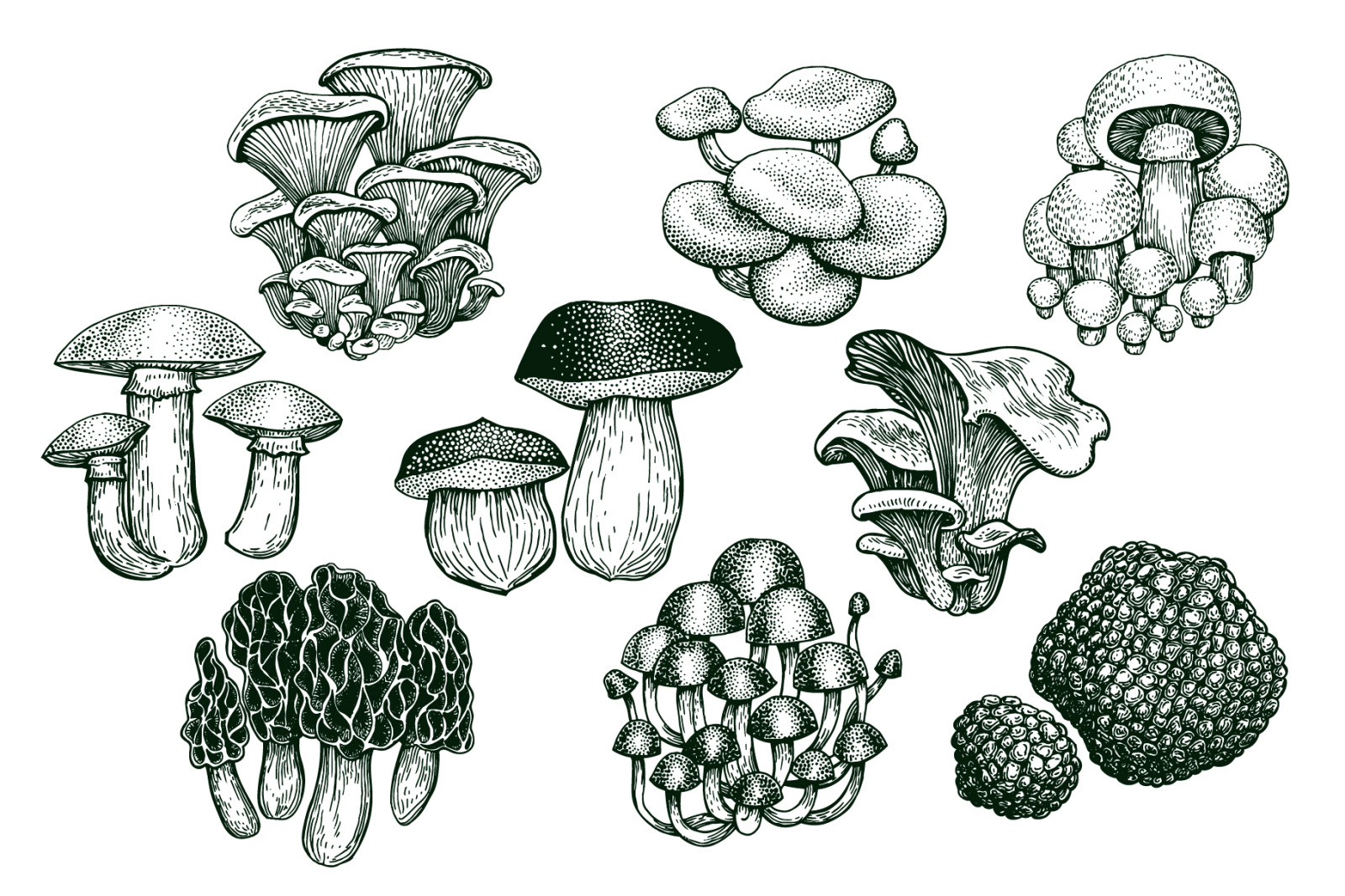 Mushrooms Vector Collection