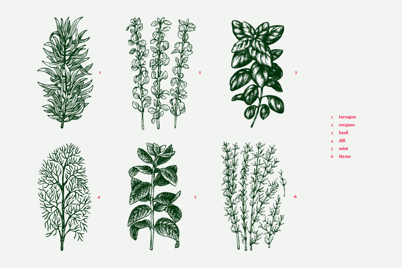Culinary Herbs Vector Collection