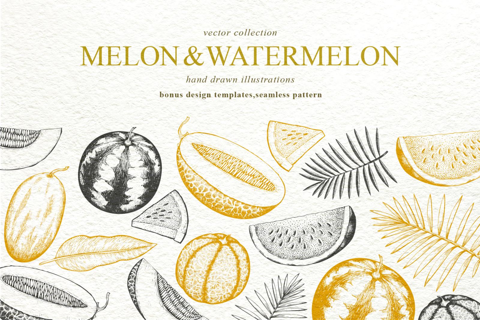 Melon & Watermelon Vector Collection