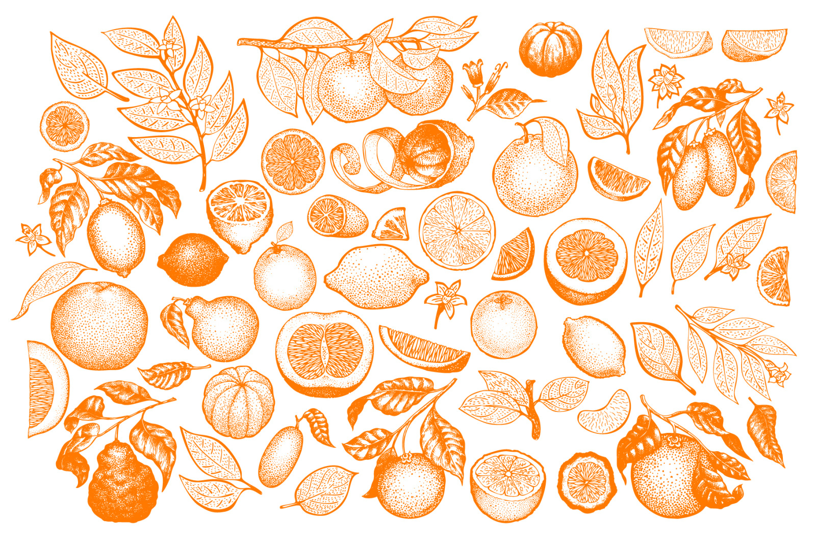 Citrus Vector Collection