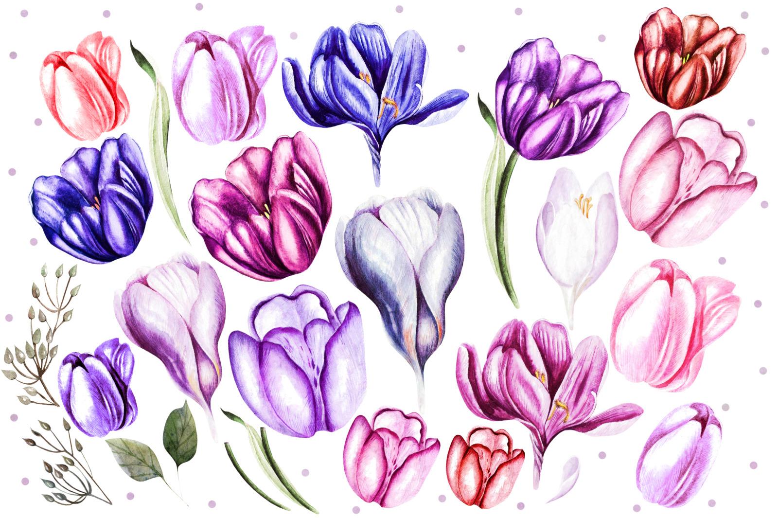 Watercolor Spring Tulips&Crocus