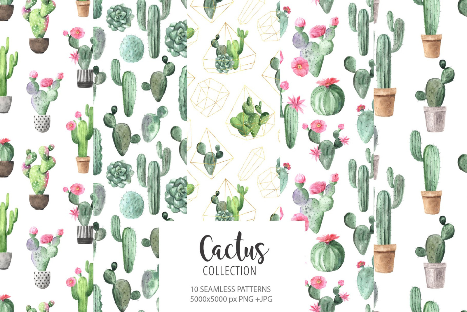 Watercolor Exotic Cactus Collection