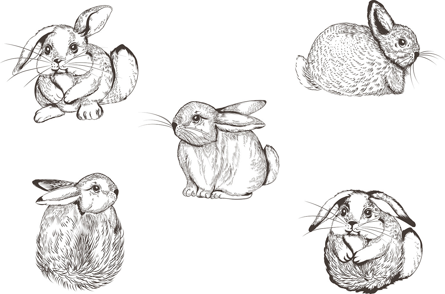 Pretty bunnies vector illustrations set
