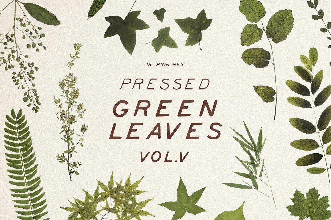 Pressed Green Leaves VOL.5