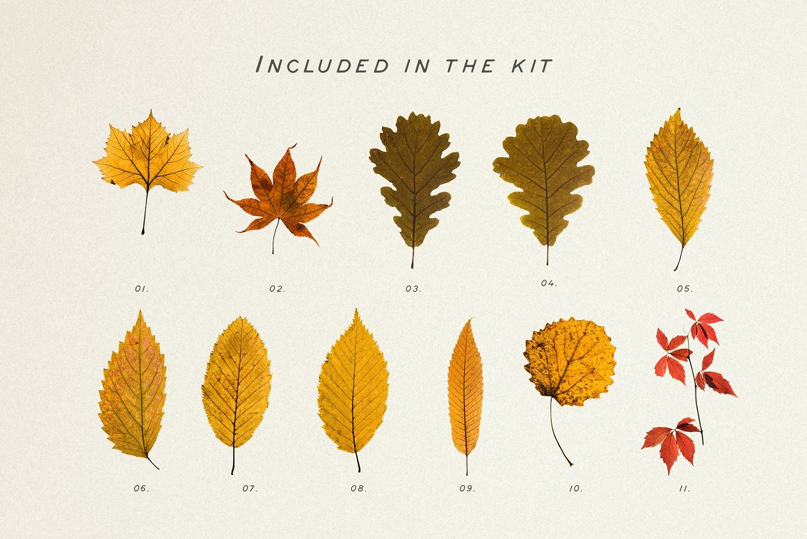 Pressed Autumn Leaves Vol.4