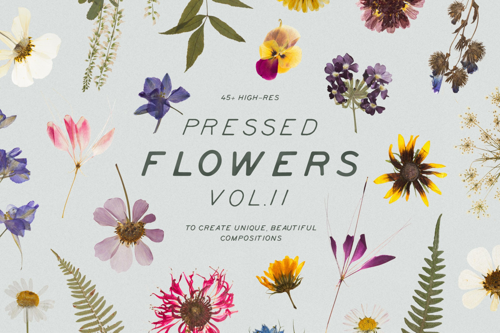 Pressed Dry Flowers & Herbs Vol.2
