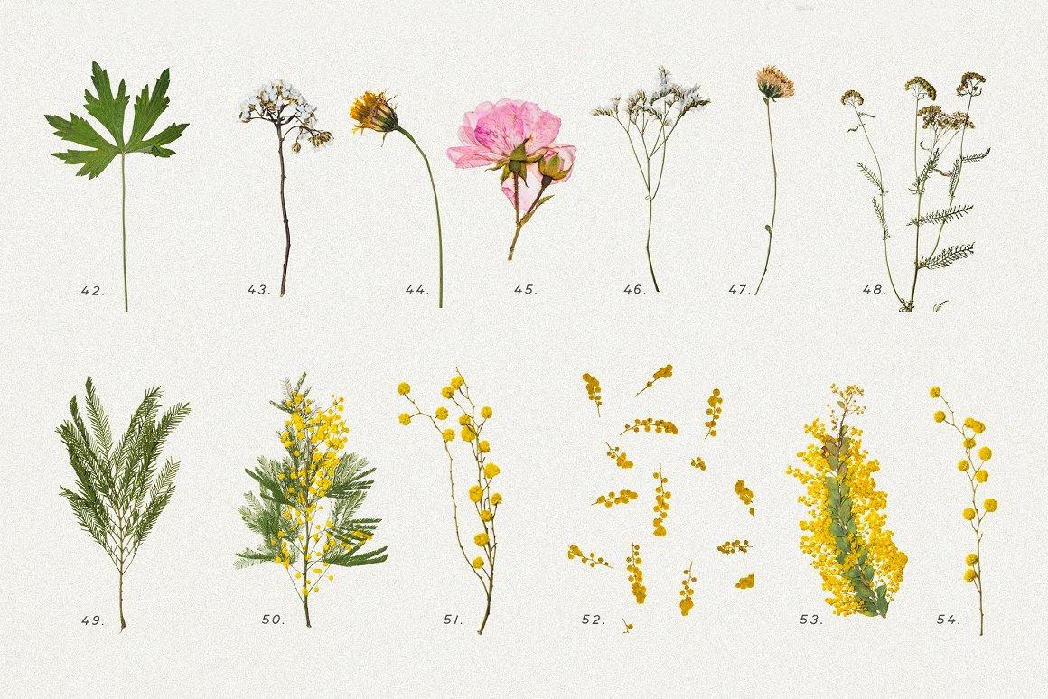 BUNDLE - Dry Flowers & Leaves