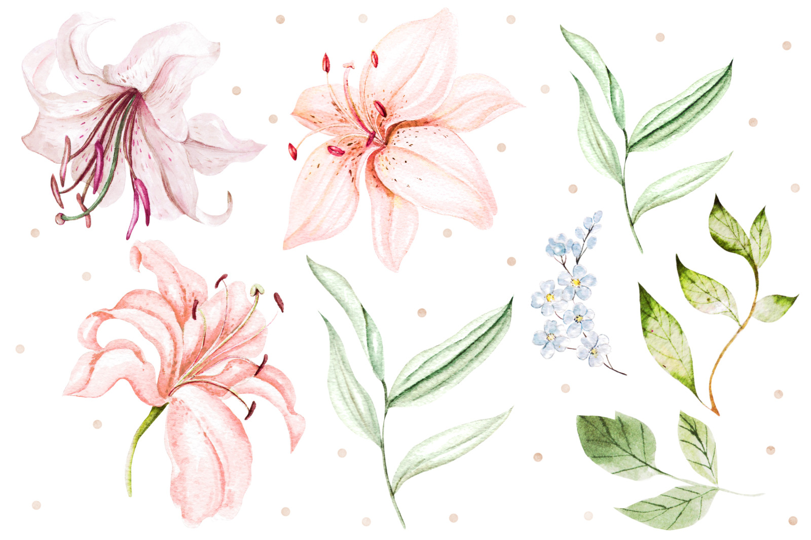 Hand Drawn watercolor flowers lily 2