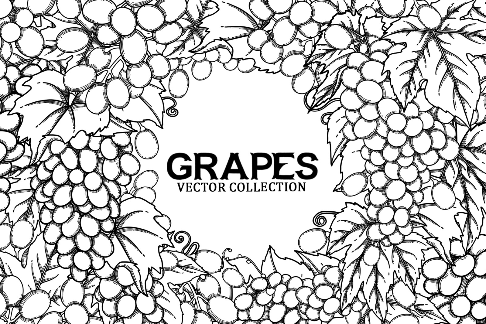 Grapes - vector graphics