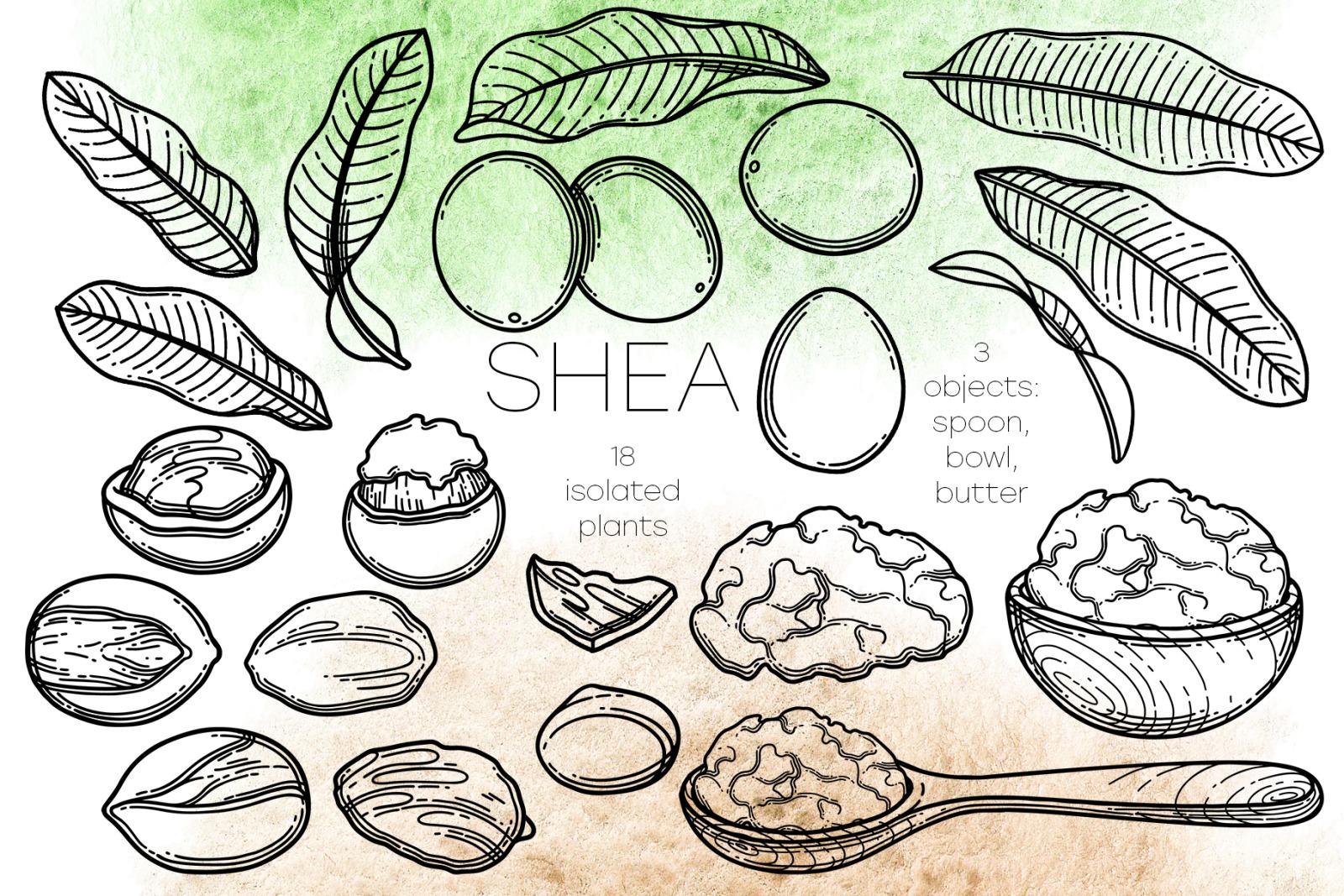 Shea - vector graphics