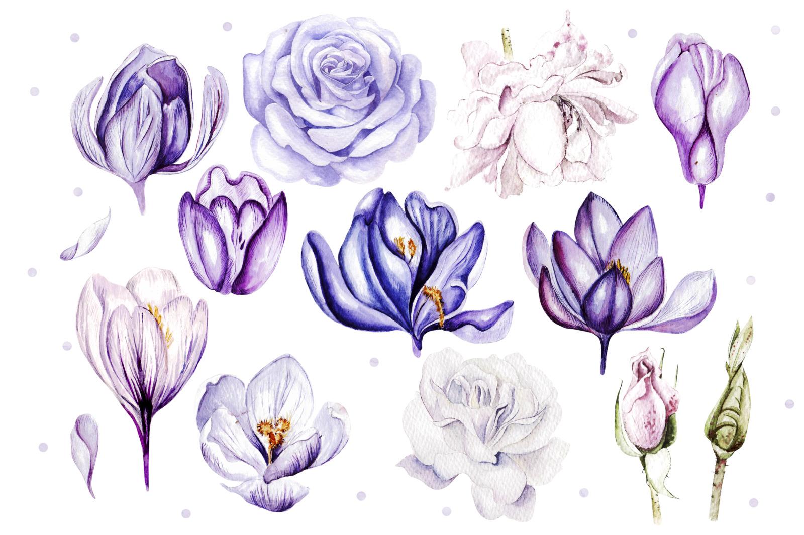 Watercolor Roses & Crocuses