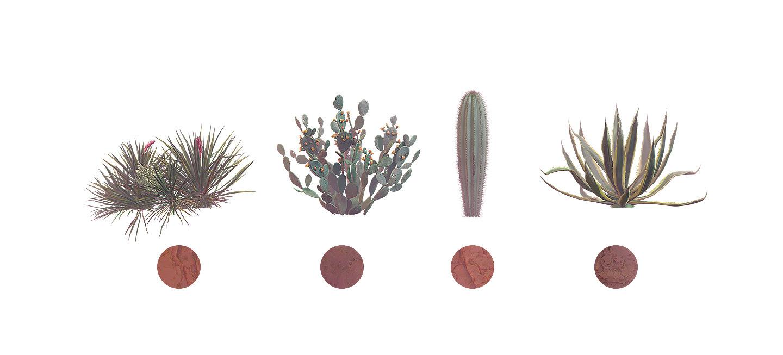 Sahara Flowers #01, 38 mockups