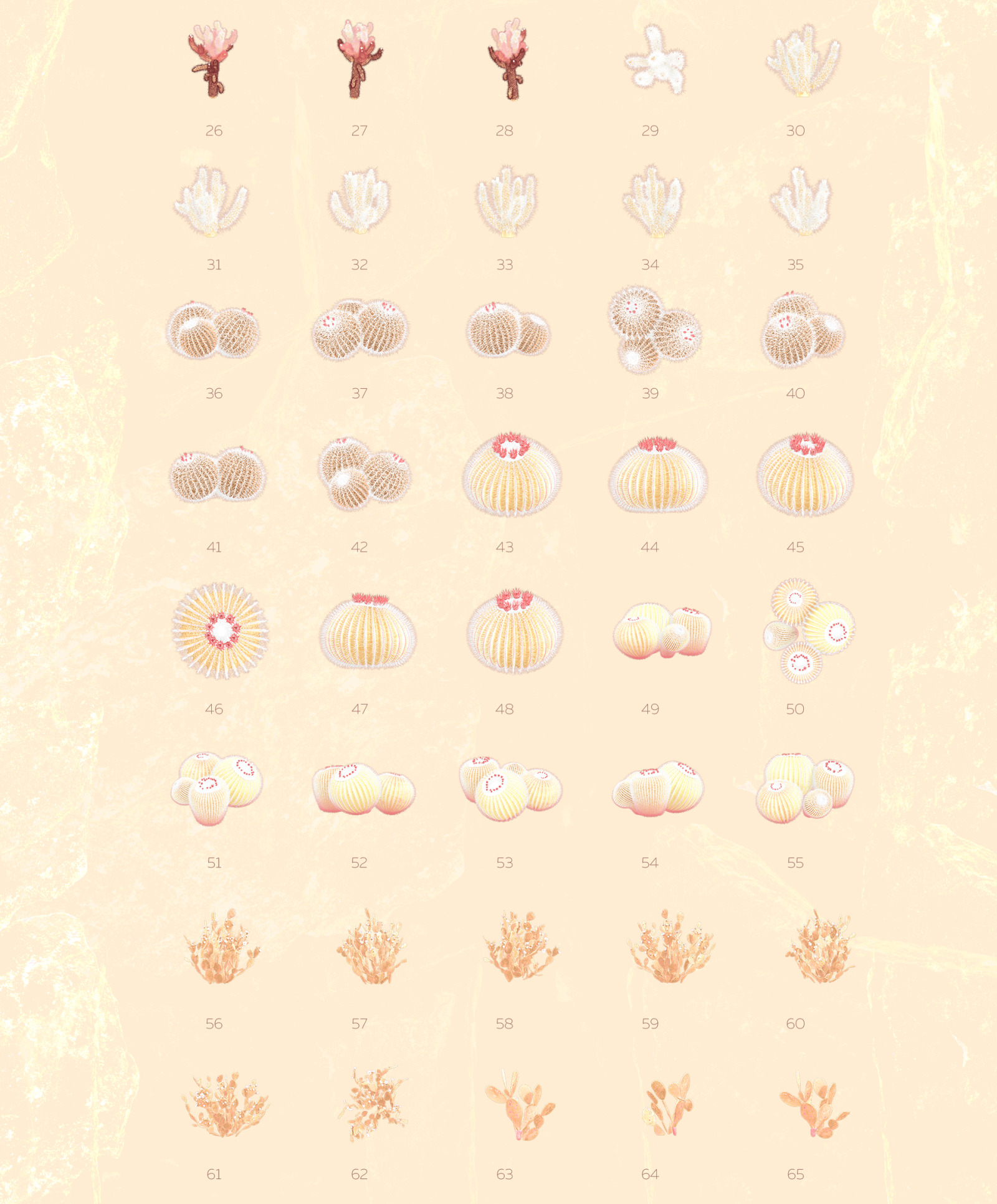Gold of the desert #01, 155 cactus and rock mockups + 30 patterns